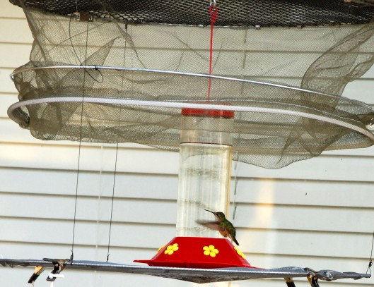 The net above the feeder will drop, safely trapping the bird