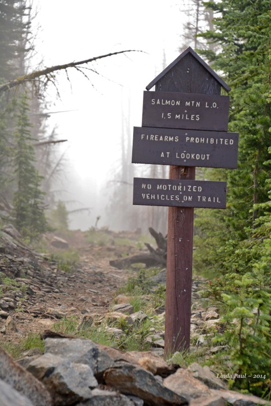 Our trek to the 2nd lookout began in fog that lifted just as we hit the trail.