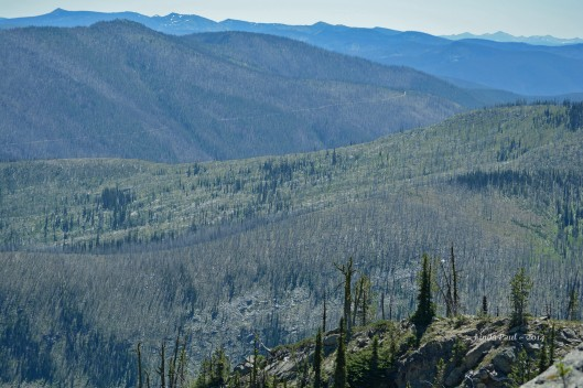 Thousands of acres of burned timber attest to nature's constant reshaping of wilderness