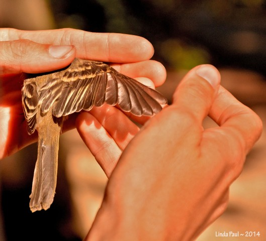 Examining the plumage provides information about age and condition.
