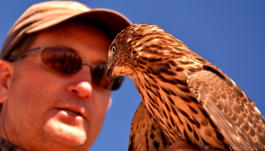 Kaltenecker shares his extensive raptor knowledge with a group of guests.