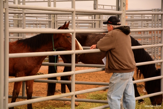 Patiently a horseman waits for contact, meanwhile assessing the animal's conformation, intelligence, and sociability.