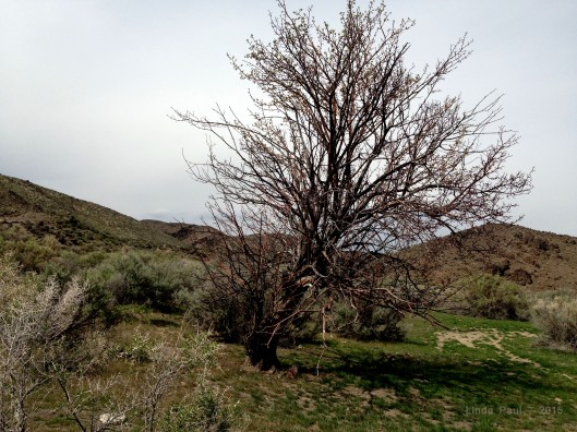 The ancient remains of this apple tree mark the stone ruins of the Al Sade homestead.