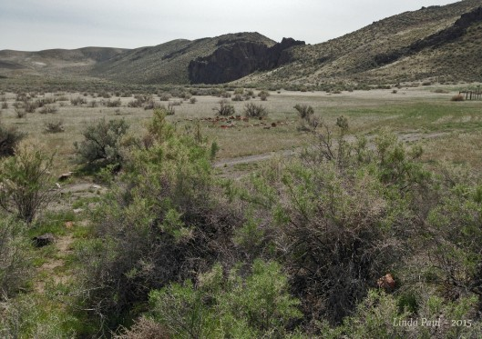The Big Jack's Creek Drainage served as our trail.
