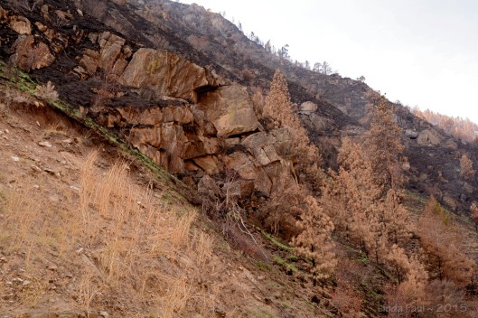 Looking up at the wall of the canyon, even the rocks are scorched.