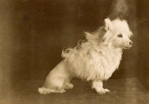 Nora's dog, Jack