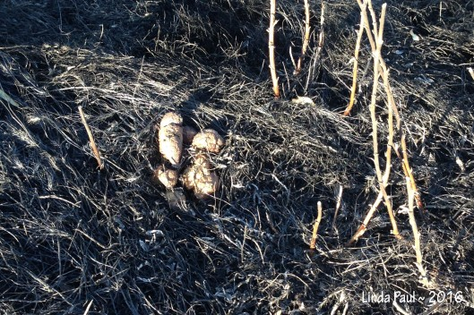 Even scorching the ever-present dog poop